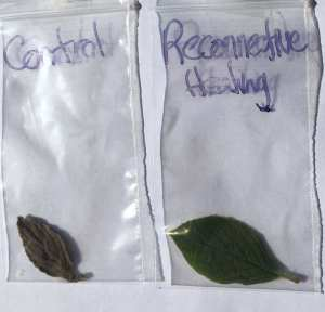 Leaf Experiment 12 July 2016