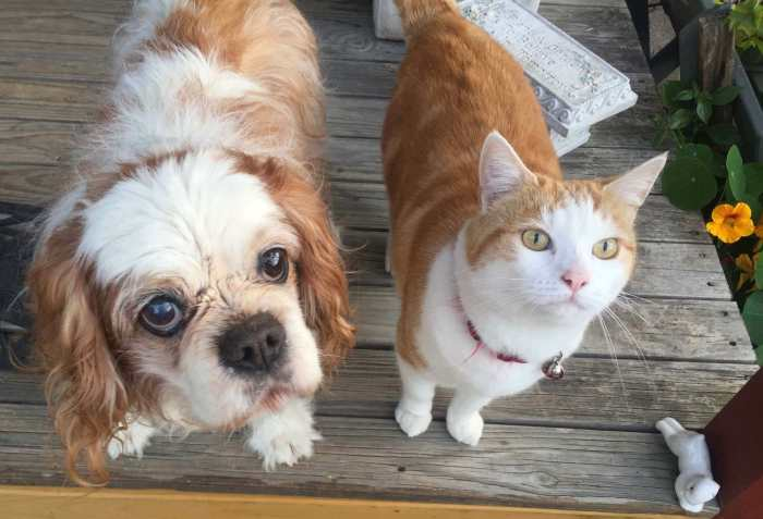 Barni the Rescue Dog and Pippi the Rescue Cat